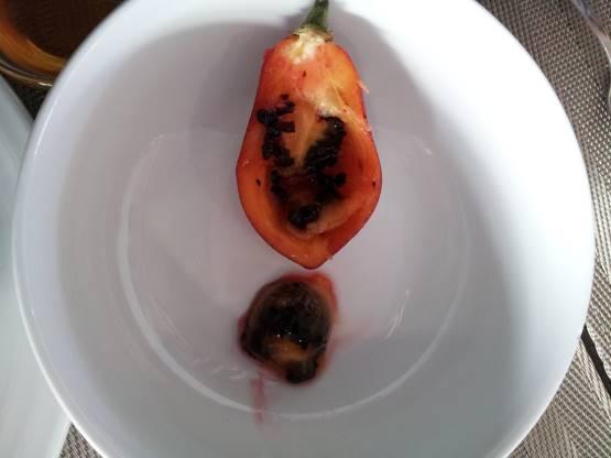 English tomato4